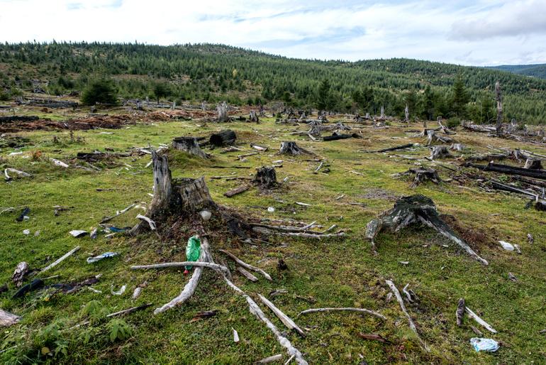 Păduri defrișate în Măguri Răcătău, județul Cluj. Foto: Raul Ștef